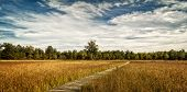 image of prairie  - A beautiful autumn scene along a winding wood boardwalk with colorful leaves of autumn in the distant trees to look at - JPG