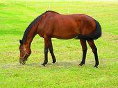image of horses eating  - Nice horse on meadow - JPG