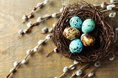pic of pussy  - Bird eggs in nest and pussy willow flowers branches on wooden background - JPG
