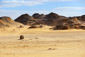 picture of sahara desert  - The Sahara desert Western desert Egypt Africa - JPG