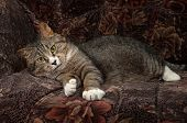 stock photo of tabby cat  - Tabby and white cat lying on colorful chair - JPG