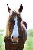 foto of brown horse  - Beautiful brown horse grazing on meadow - JPG