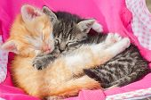 picture of sleeping beauty  - Red kitten embraces a gray kitten - JPG