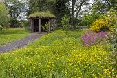 picture of wildflowers  - Wildflowers including buttercups forget me nots and pink campions in front of hut at Kildford Barns on the outskirts of Dumfries - JPG