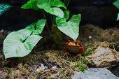 image of terrarium  - Tomato frog sitting under leaf in terrarium - JPG