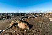 image of tierra  - Low tide in the Beagle Channel Tierra del Fuego  - JPG