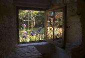 Cottage Window And Iris