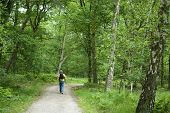 stock photo of bagpack  - a man is walking the dog in a beautiful forest - JPG