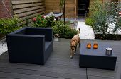 Brown dog in modern garden
