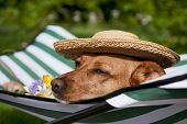 Dog lazy on it's bed with funny hat and flowers