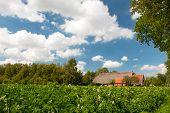 boerderij in landschap met aardappelen in landbouw velden