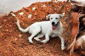 white Greek stray dog laying near a palm tree