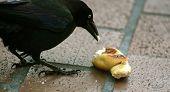 Bird At Lunch