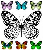 Butterfly vector template with samples. Easy editable wings color. Paper Kite or Rice Paper butterfl