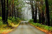 Misty road in the Grampians