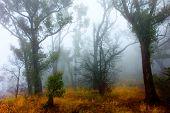 Fog surrounds Grampians Forest