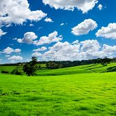 Beautiful Green Meadow with white clouds