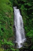 Waterfalls Of Dominica