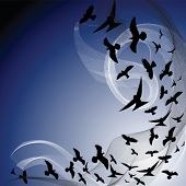 silhouette of birds flying in a dark sky