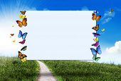 foto of road sign  - Butterflies holding a blank sign  - JPG