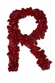 Red rose petals forming every letter of the alphabet - see portfolio for other letters