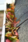 Leaves In Gutter #3