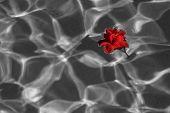 Floating Flower #3 Black And White