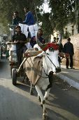 bullock cart on street, delhi, india