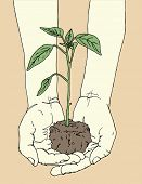 picture of plant pot  - Hands holding tomato plant - JPG