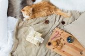 pets, hygge and christmas concept - red tabby cat lying on blanket with gift, oatmeal cookies and ca poster