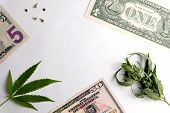 Parts Of Small Us Bills, Leaves And Grains Of Marijuana On A White Background. A Frame With Free Spa poster