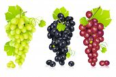 illustration of different variety of grape on white background