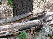 Splintered wood and gnarled tree