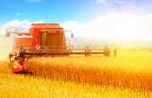 Combine working in field. Harvester harvests poster