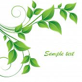 Abstract floral background. Element for design.