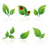 foto of green leaves  - Set of green leaves - JPG