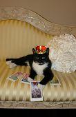 Gato de esmoquin de tarot