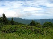 Roan Mountain In Summer