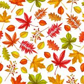 Seamless Pattern With Autumn Leaves Maple, Oak, Elm, Chestnut Or Japanese Maple, Rhus Typhina And Au poster