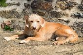 Portrait outdoor little cross breed dog against stone wall poster