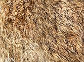 Wool background. Detail of rabbit fur