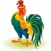 picture of fluffing  - Colorful rooster - JPG