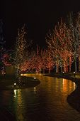 picture of christmas lights  - christmas lights on trees illuminating a walkway - JPG