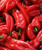 Many spicy red chillies