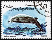 Postage stamp Cuba 1980 Cuvier's Beaked Whale