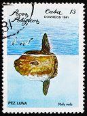 Postage stamp Cuba 1981 Ocean Sunfish