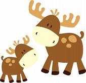 Baby Deer And Momy