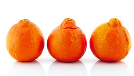 image of tangelo  - Three tangelos in row isolated over white background - JPG
