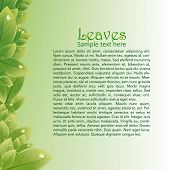Green leaves abstract background for brochures