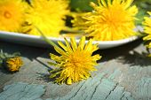 Fresh Dandelion Flowers